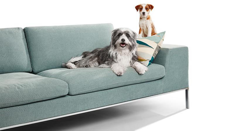 hund-auf-sofa