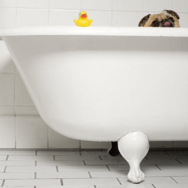 Fellpflege Hund Kurzhaar