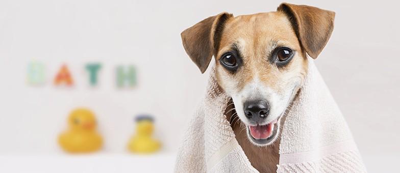 Fellpflege bei Hunden