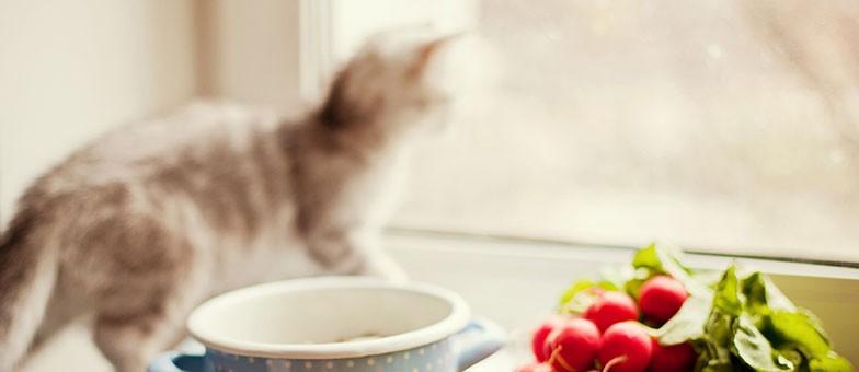 Gefahren für Katzen