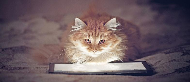Katzen Apps