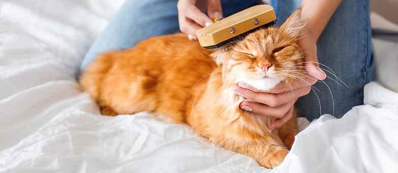 Katzen Fellpflege