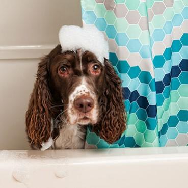 Fellpflege Hund Langhaar