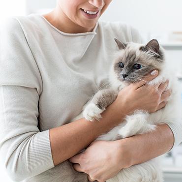 katzenallergie tipps therapie f r allergiker tierisch wohnen. Black Bedroom Furniture Sets. Home Design Ideas