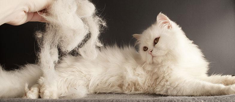 Katzenhaare entfernen Bürste