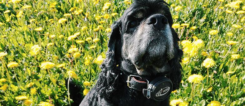 Hund Blumenwiese gelb
