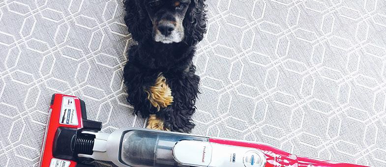 Hund Staubsauger