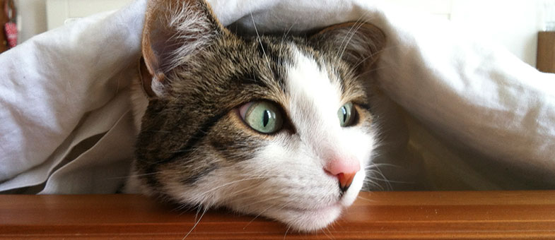 Katze Bett