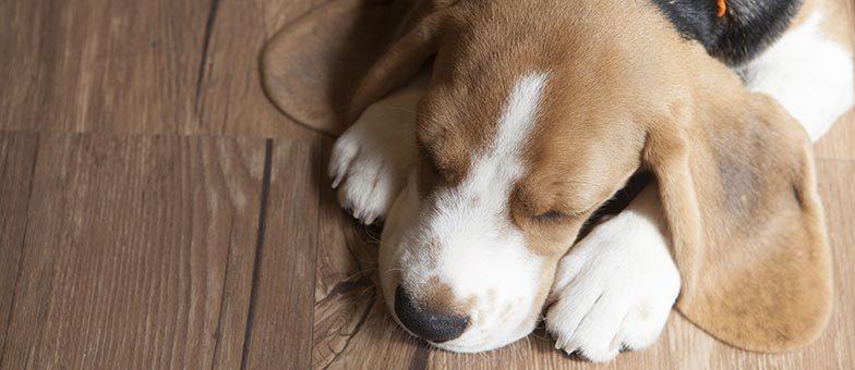 Welcher Bodenbelag Ist Für Hunde Geeignet