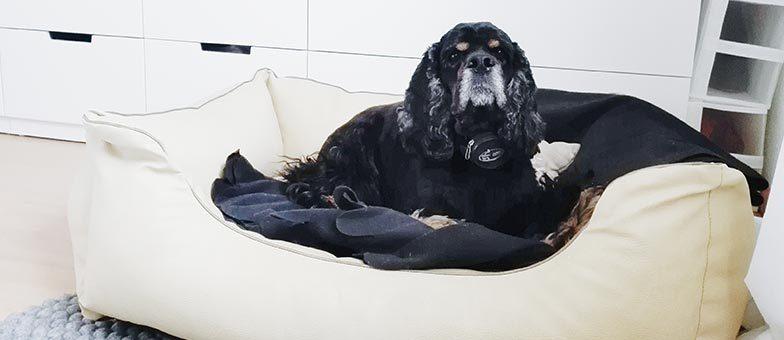 Hund beibringen wo sein Platz ist
