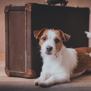 So Einfach Machst Du Deine Wohnung Hundesicher Tierisch Wohnen
