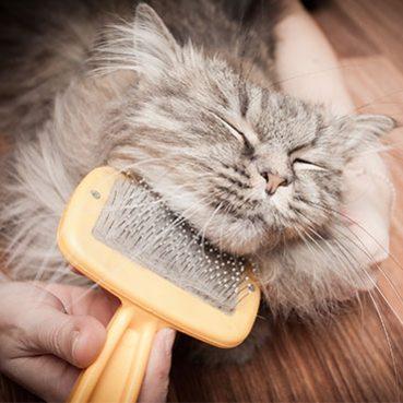 Katzenhaare entfernen von den Möbeln