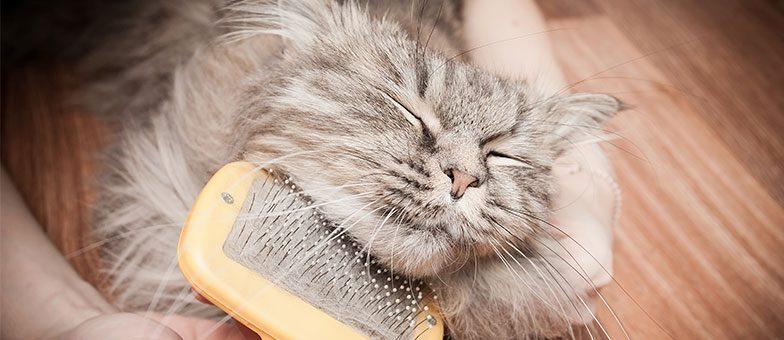 katze ohne haare katzen k rpersprache rassekatzen kostenlos ausstellen bei nacktkatzen liste. Black Bedroom Furniture Sets. Home Design Ideas