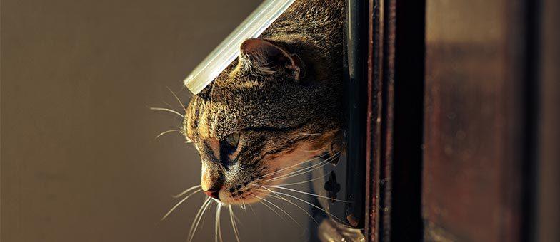 katzenklappe einbauen in einer mietwohnung tierisch wohnen. Black Bedroom Furniture Sets. Home Design Ideas