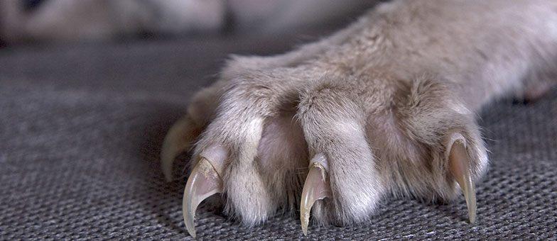 Katzenkrallen schneiden