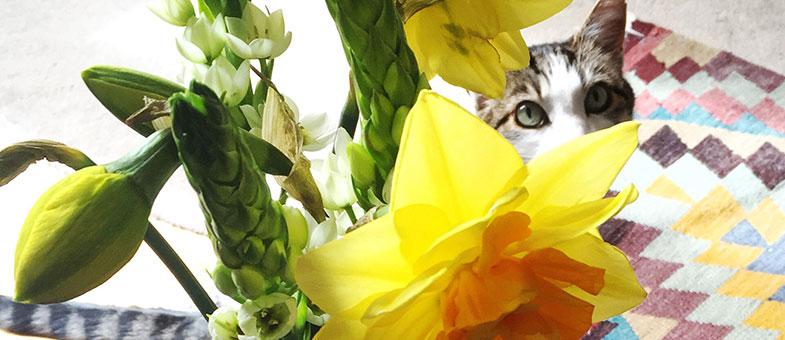 Für Katzen giftige Pflanzen