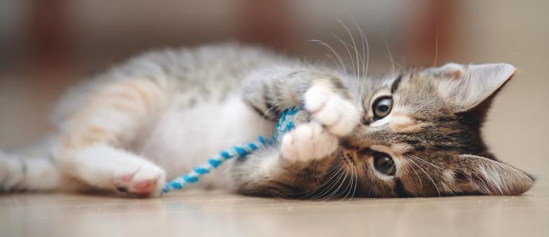 Baby Katze spielt
