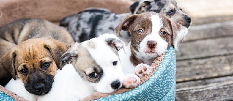 Ausgefallene Hundebetten
