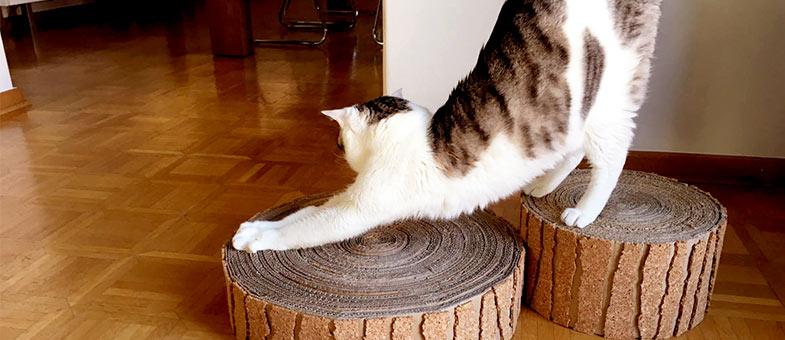dinge die jede wohnung mit katze haben sollte tierisch wohnen. Black Bedroom Furniture Sets. Home Design Ideas