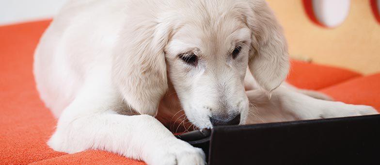 Technik Gadgets für den Hund
