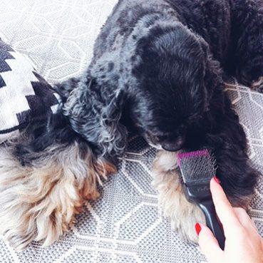 Hundepflege im Salon