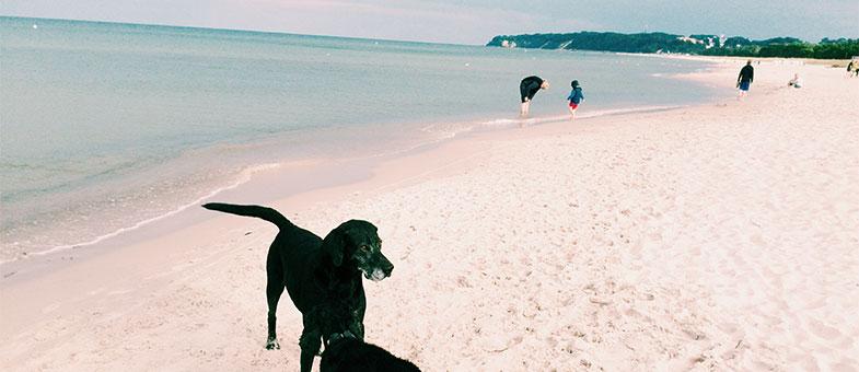 Hundestrand auf Rügen