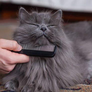 Katze hat Schuppen