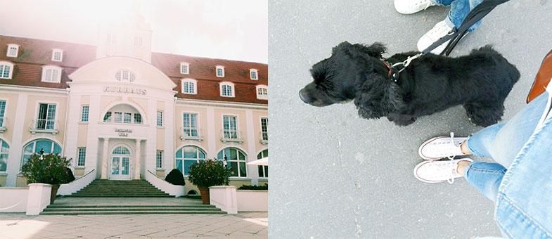 Urlaub in Binz mit dem Hund