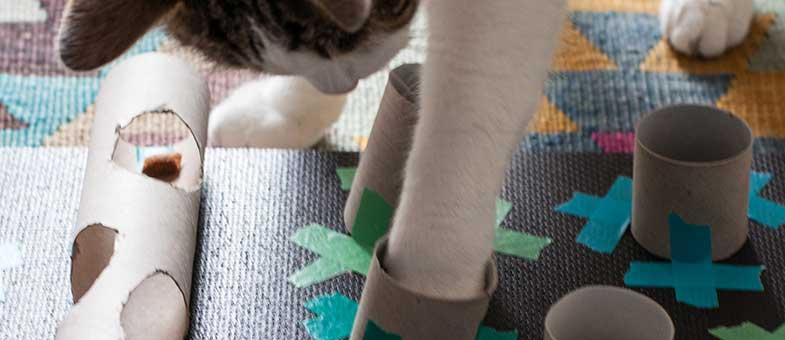 Katze spielt mit Fummelbrett