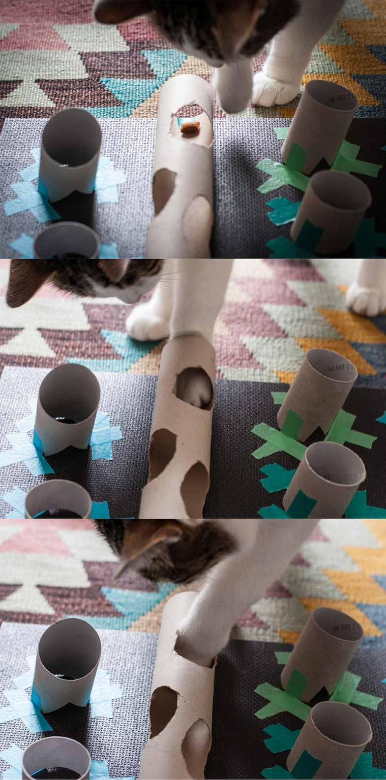 Katze spielt mit selbstgebauten Spielzeug