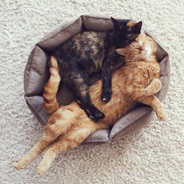 wie bringe ich meine katze zum trinken tierisch wohnen. Black Bedroom Furniture Sets. Home Design Ideas