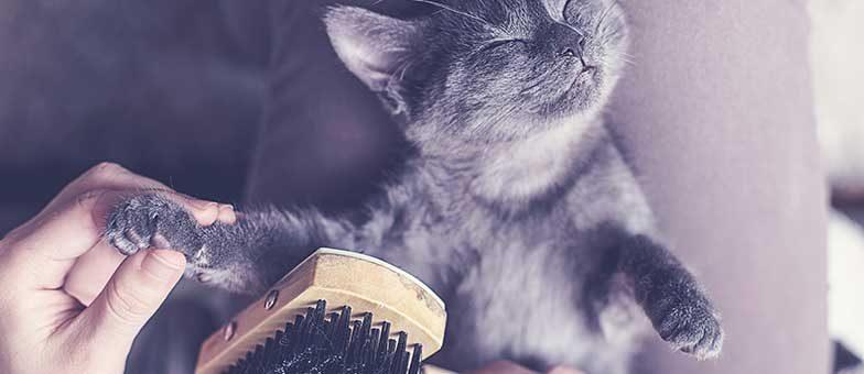 Verfilztes Katzenfell?