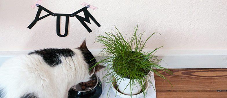 Richtiges Katzenfutter für glänzendes Fell