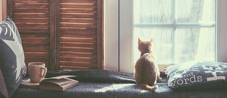 Freilauf oder Wohnungshaltung für die Katze