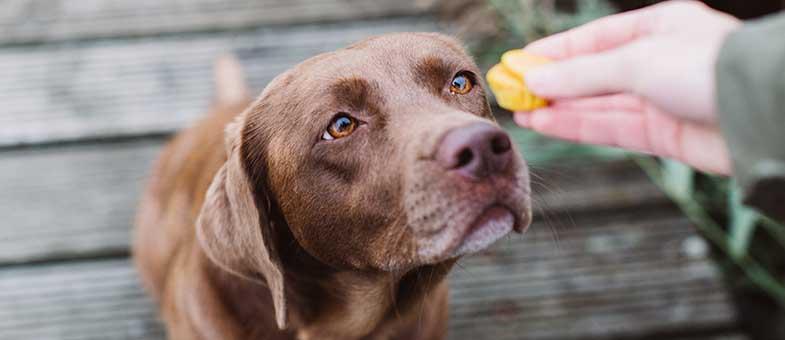 Hund isst Leckerli
