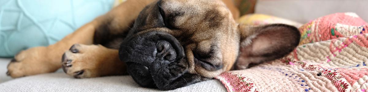 ausgefallene hundebetten f r die sch nsten hundetr ume. Black Bedroom Furniture Sets. Home Design Ideas