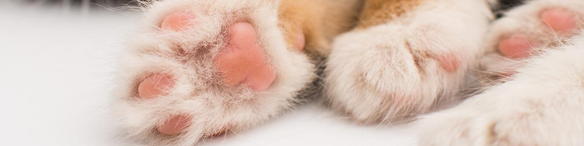 Bringe deiner Katze bei nicht ins Bett zu gehen | tierisch wohnen