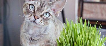 Katzengras selber pflanzen