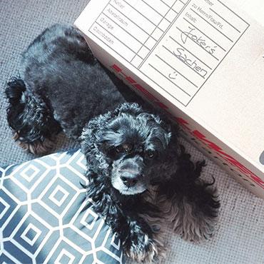 tipps f r den umzug mit hund eingew hnung tierisch wohnen. Black Bedroom Furniture Sets. Home Design Ideas