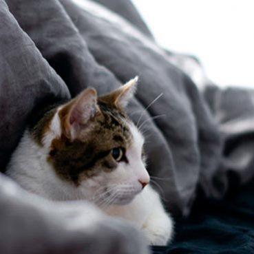 Wohnung mit Katze