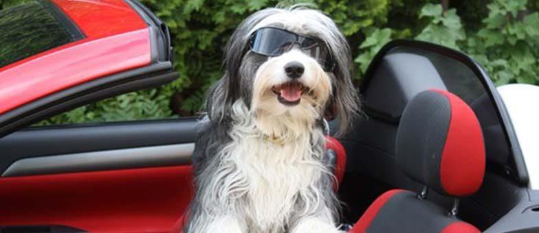Filmhund Tom Tom