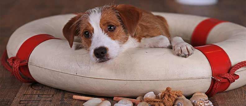 Filmhund Nesquik