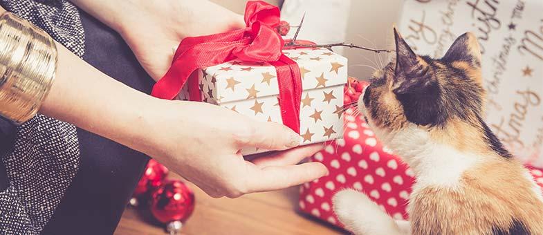 9 Ideen Für Weihnachtsgeschenke Für Die Katze Tierisch Wohnen