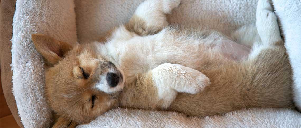 Hundebett als Geschenk zu Weihnachten