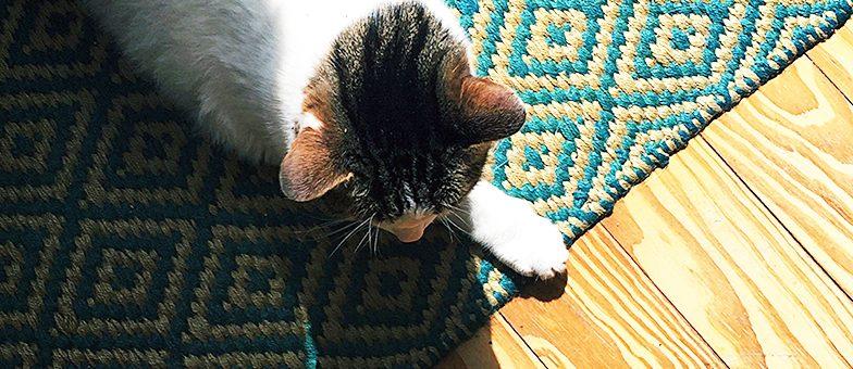 Katze sitzt auf Teppich