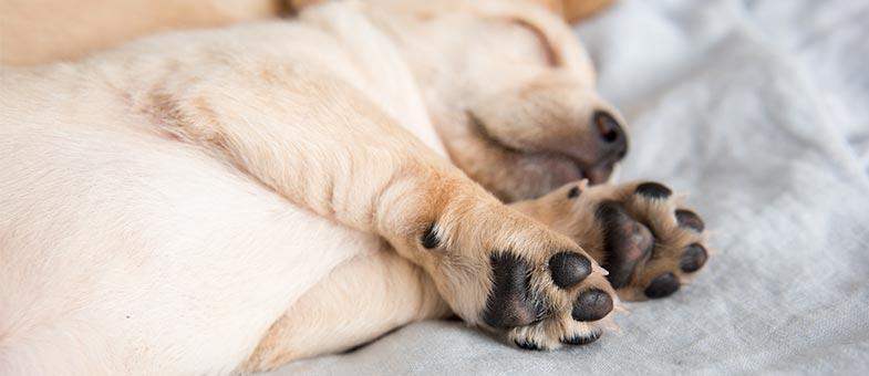 Gepflegte Hundepfoten