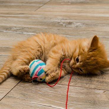 Beschäftigungsmöglickeiten für Katzen