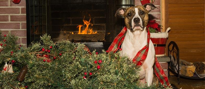 Hund schmeisst Weihnachtsbaum um