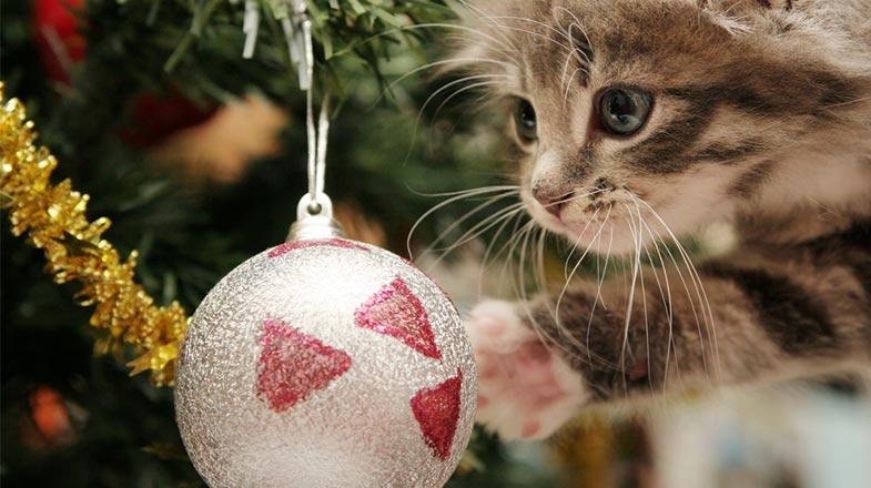 Katze klettert auf Weihnachtsbaum