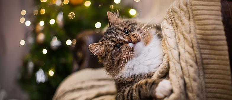 katzensicherer-weihnachtsbaum